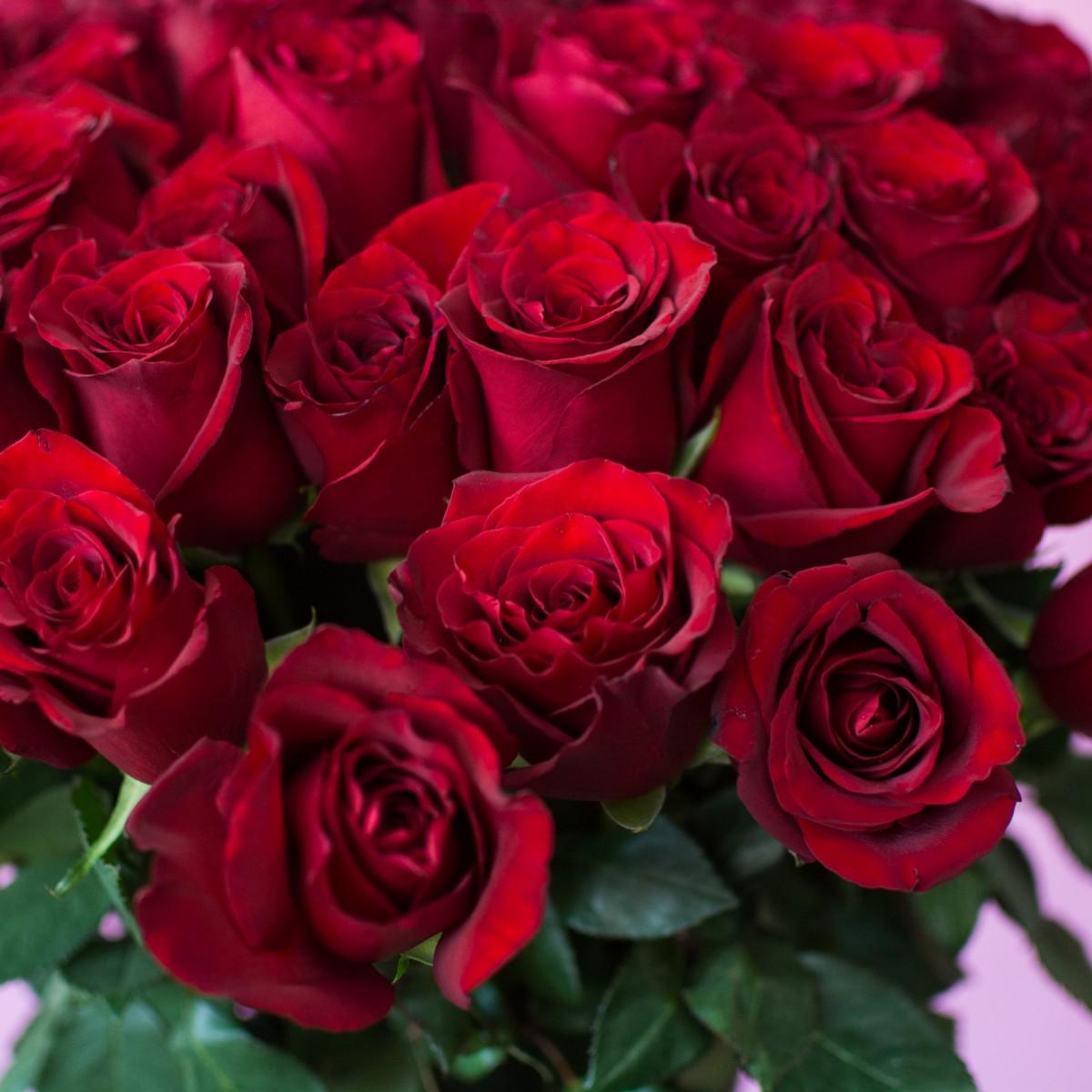 Explorer 51 роза