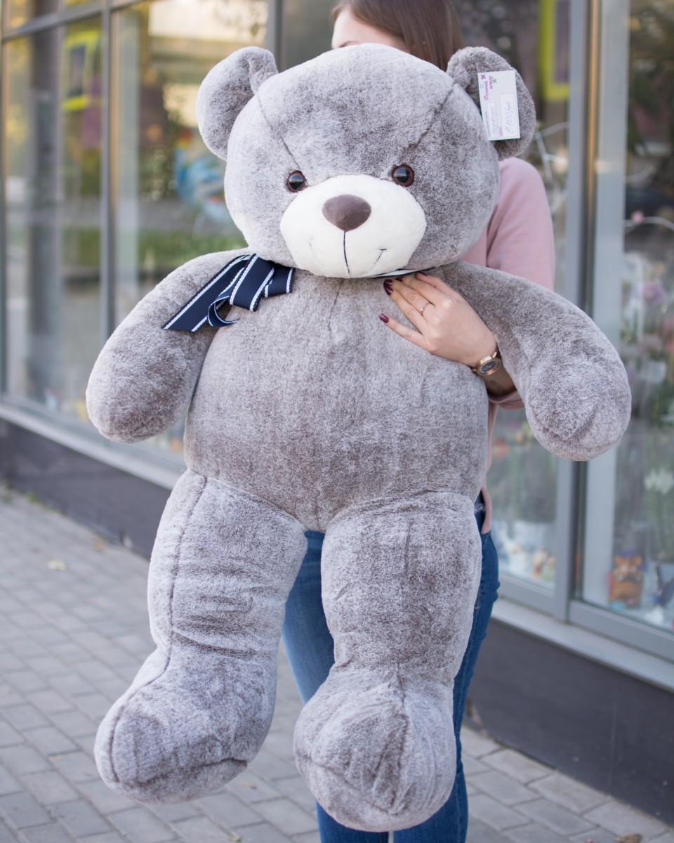 Медведь серый