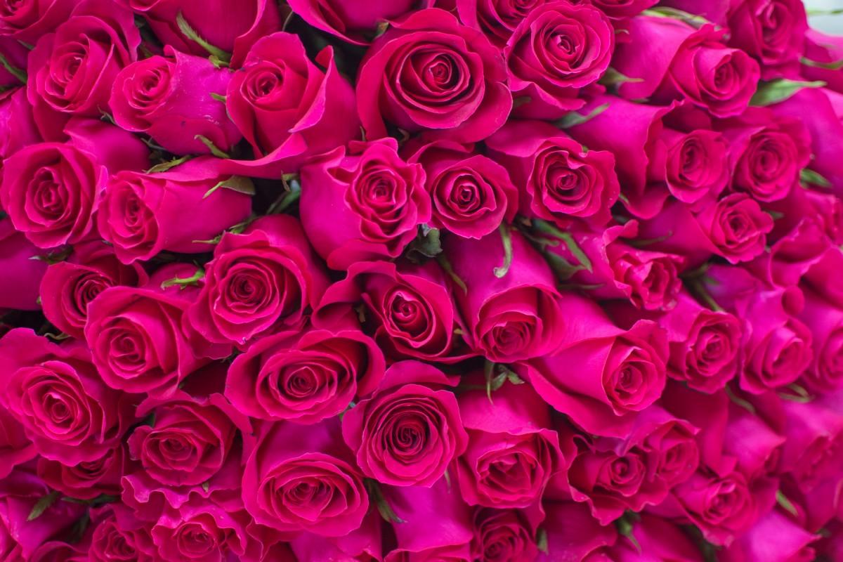 Gotcha 101 роза
