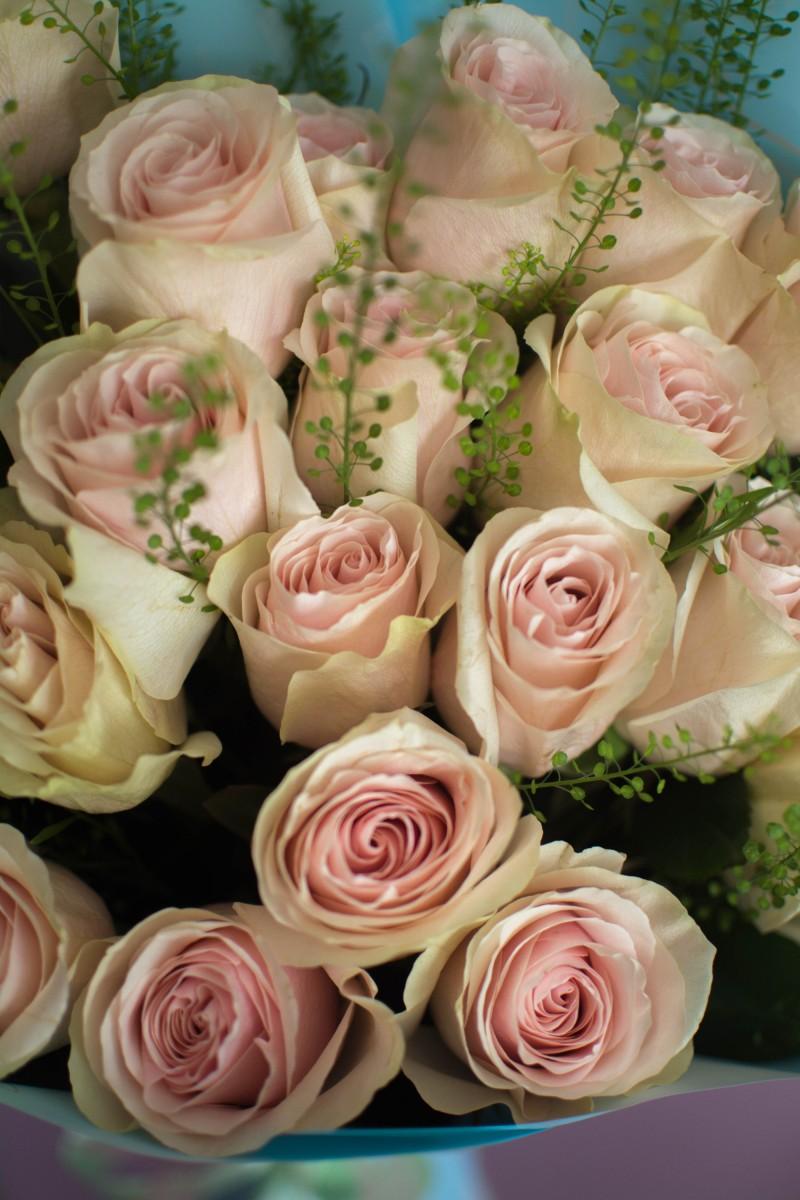 Frutteto 25 роз
