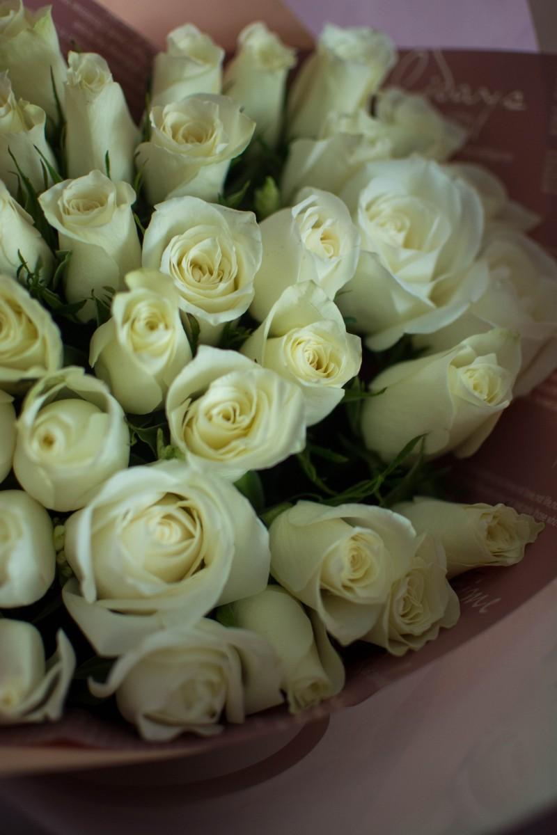 31 роза Кения