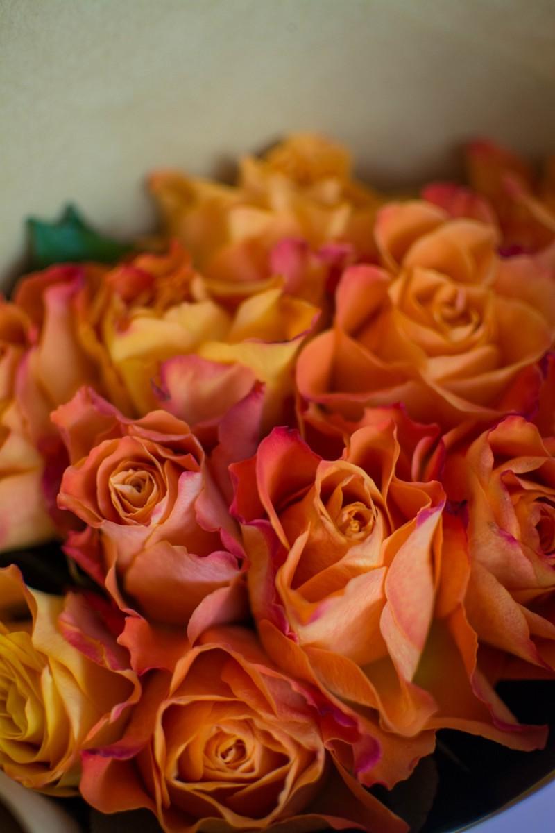 11 кенийских роз