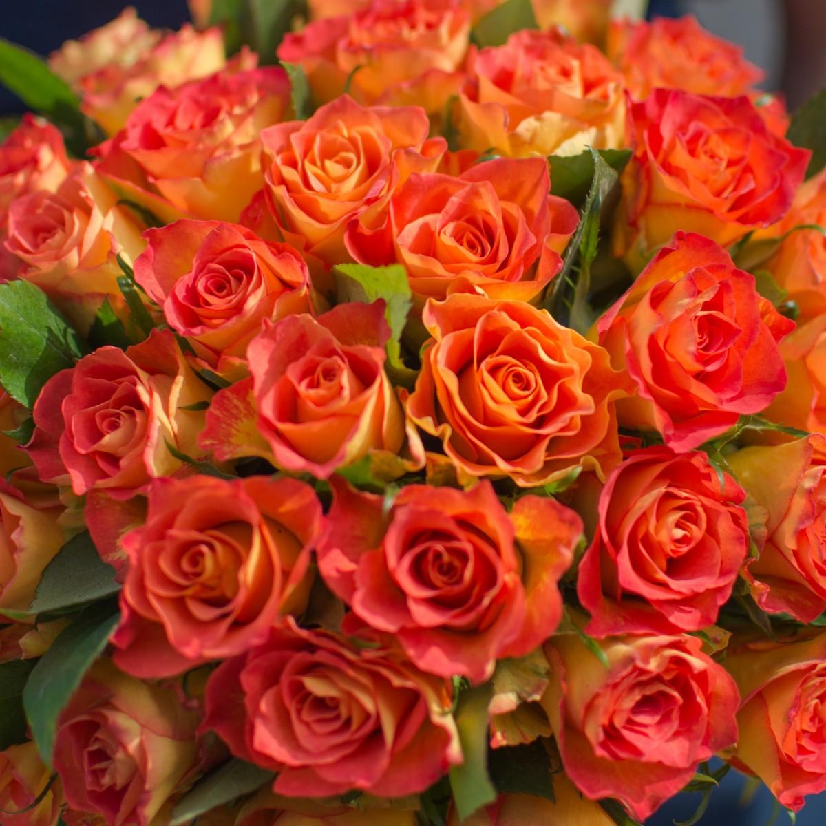 Рыжий шарик роз