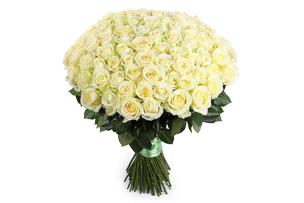 Mondial 101 роза