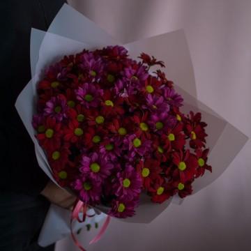 15 красно-розовых хризантем