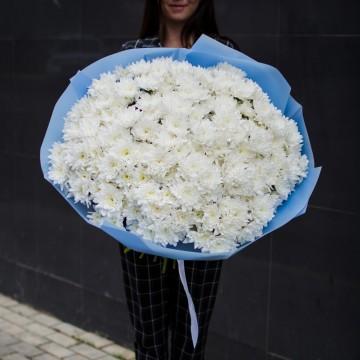 31 белая хризантема