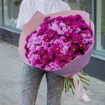 31 розовая хризантема