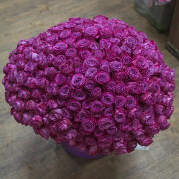 301 роза 60 см